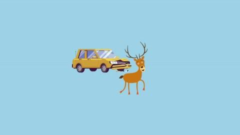 El seguro por colisión con animales cinegéticos